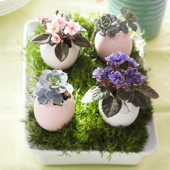 Egg Shell Succulents planter