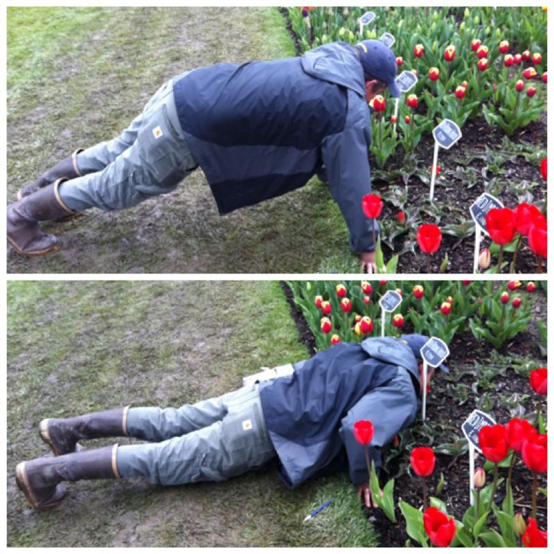 Sew Creative Tulip Festival Fun