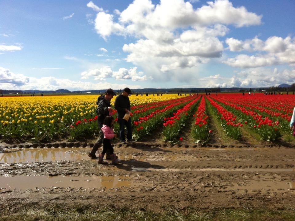 Tulip Festival Sew Creative 7