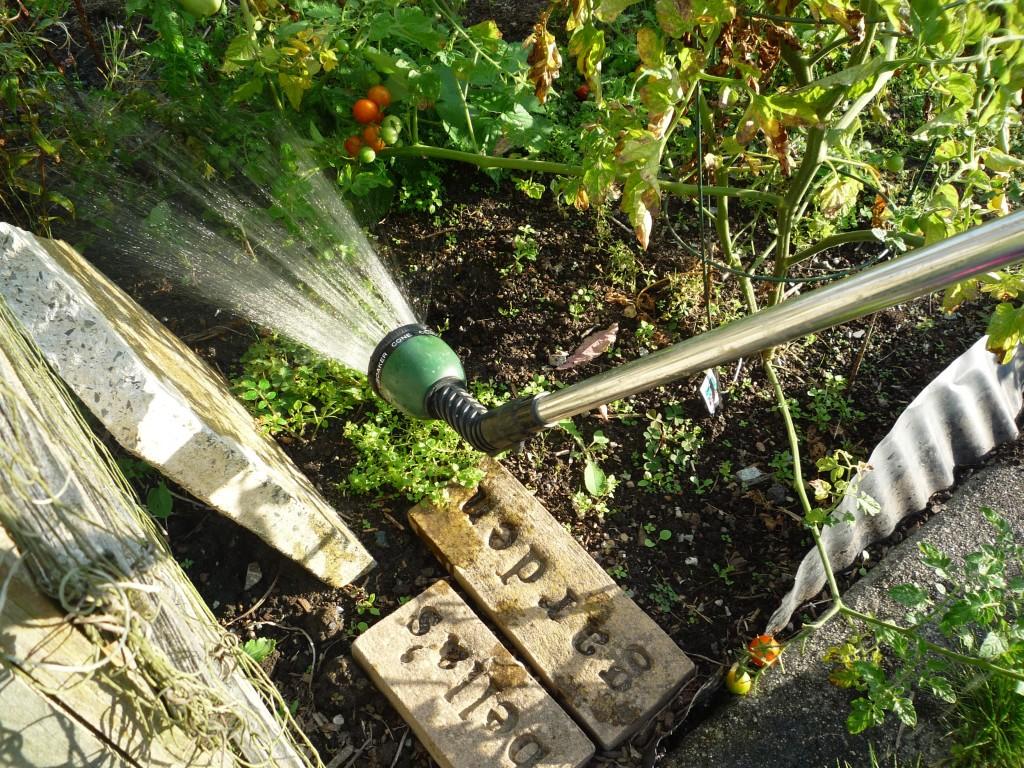 Bean's Garden Photo