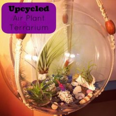 Upcycled Air Plant Terrarium