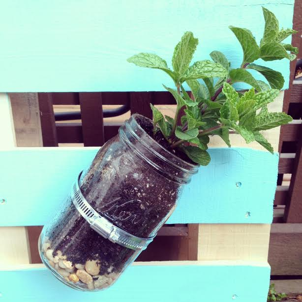 DIY Pallet Mason Jar Herb Garden Tutorial. This post has step by step instructions and tons of photos. A great family weekend project. 10
