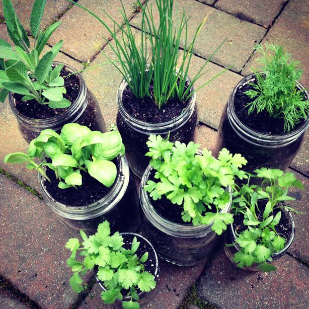 DIY Pallet Mason Jar Herb Garden Tutorial. This post has step by step instructions and tons of photos. A great family weekend project. 11