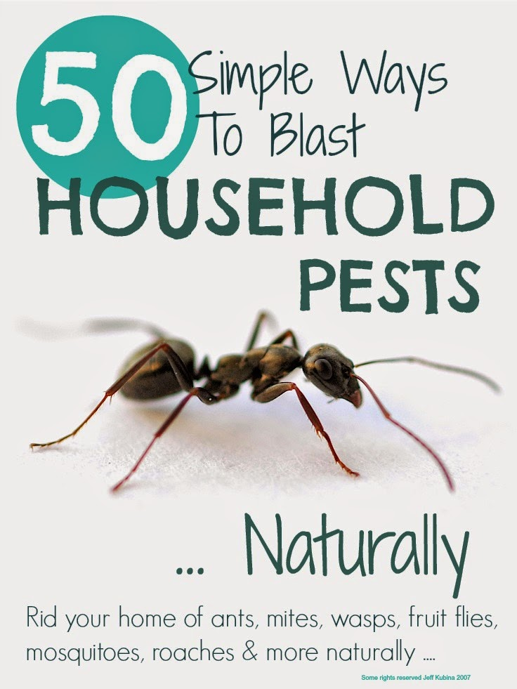 GetRidHouseholdPestsNaturally