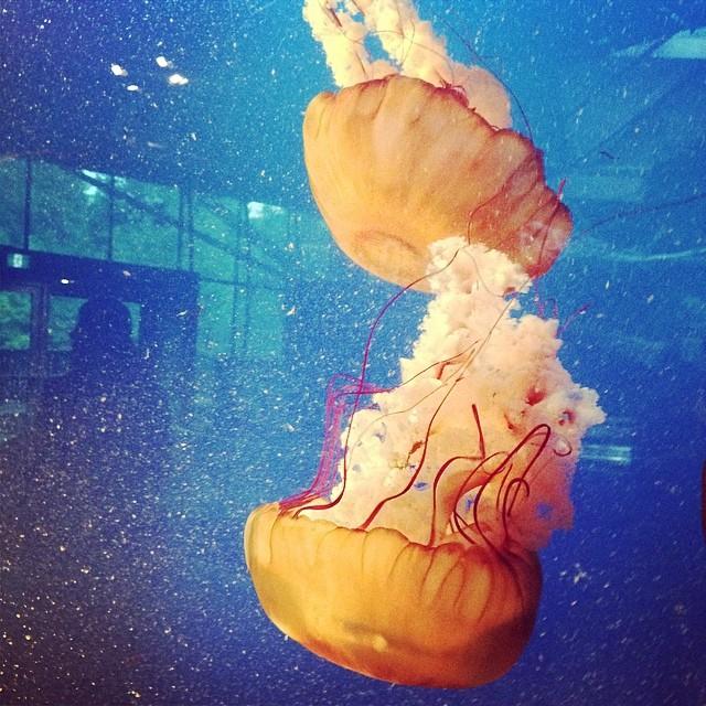 Jellyfish at Vancouver Aquarium media expansion reveal #ilovevanaqua
