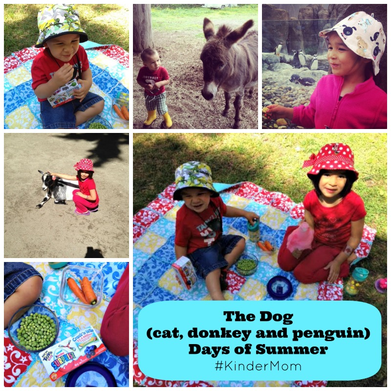 The Dog  (cat, donkey and penguin) Days of Summer #KinderMom