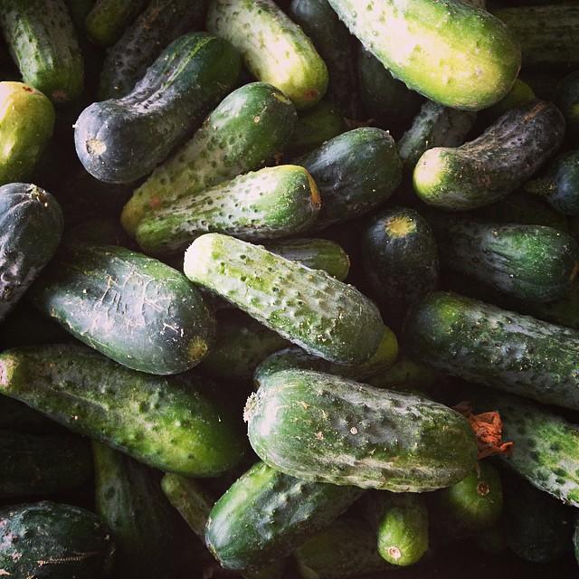 A Bushel of Pickling Cucumbers
