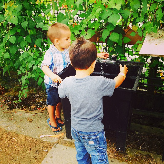 Washing their hands after the petting farm. It's been so much fun watching these boys grow up together.