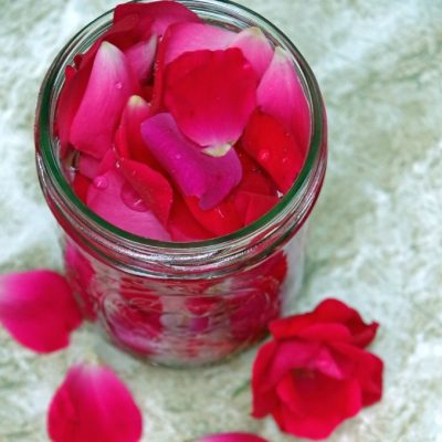 How to Make Homemade Rose Water for Natural Skincare Products- HCF DIY of the Week