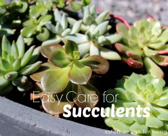 Pinterest party my favorite pins from canada 39 s top diy for How do you take care of succulents