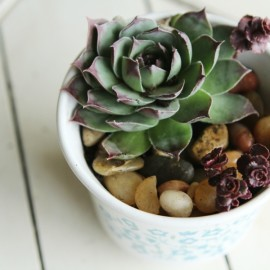 Have a black thumb? Turn your black thumb to green with succulents! Seriously! These things are so easy to grow. Low maintenance plants that look pretty? Bonus! Check out this adorable DIY Succulent Teacup Planter.