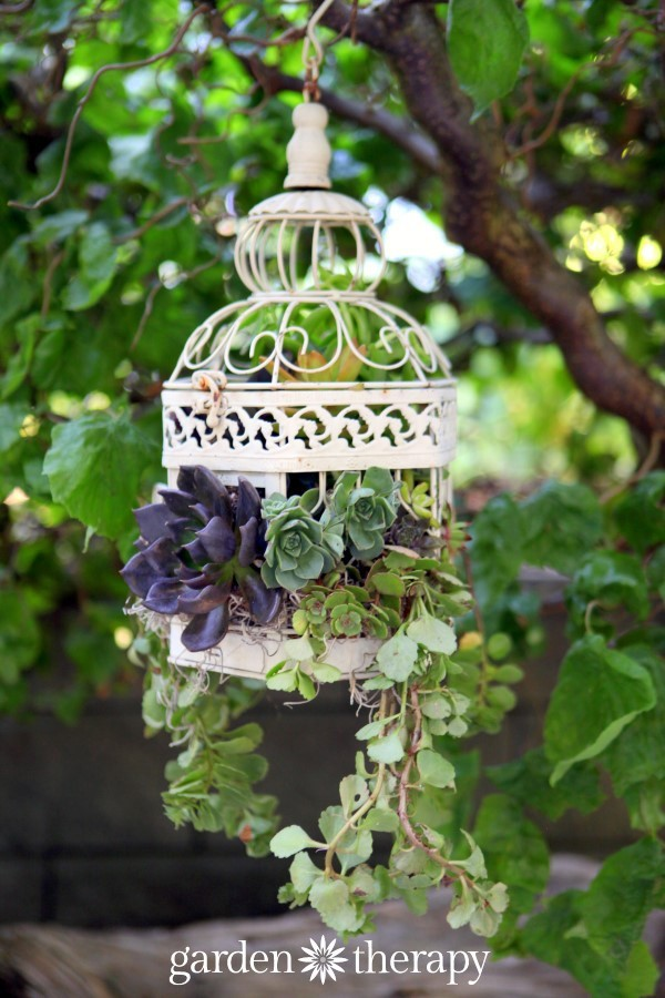 Succulent Birdcage Planter from Garden Therapy