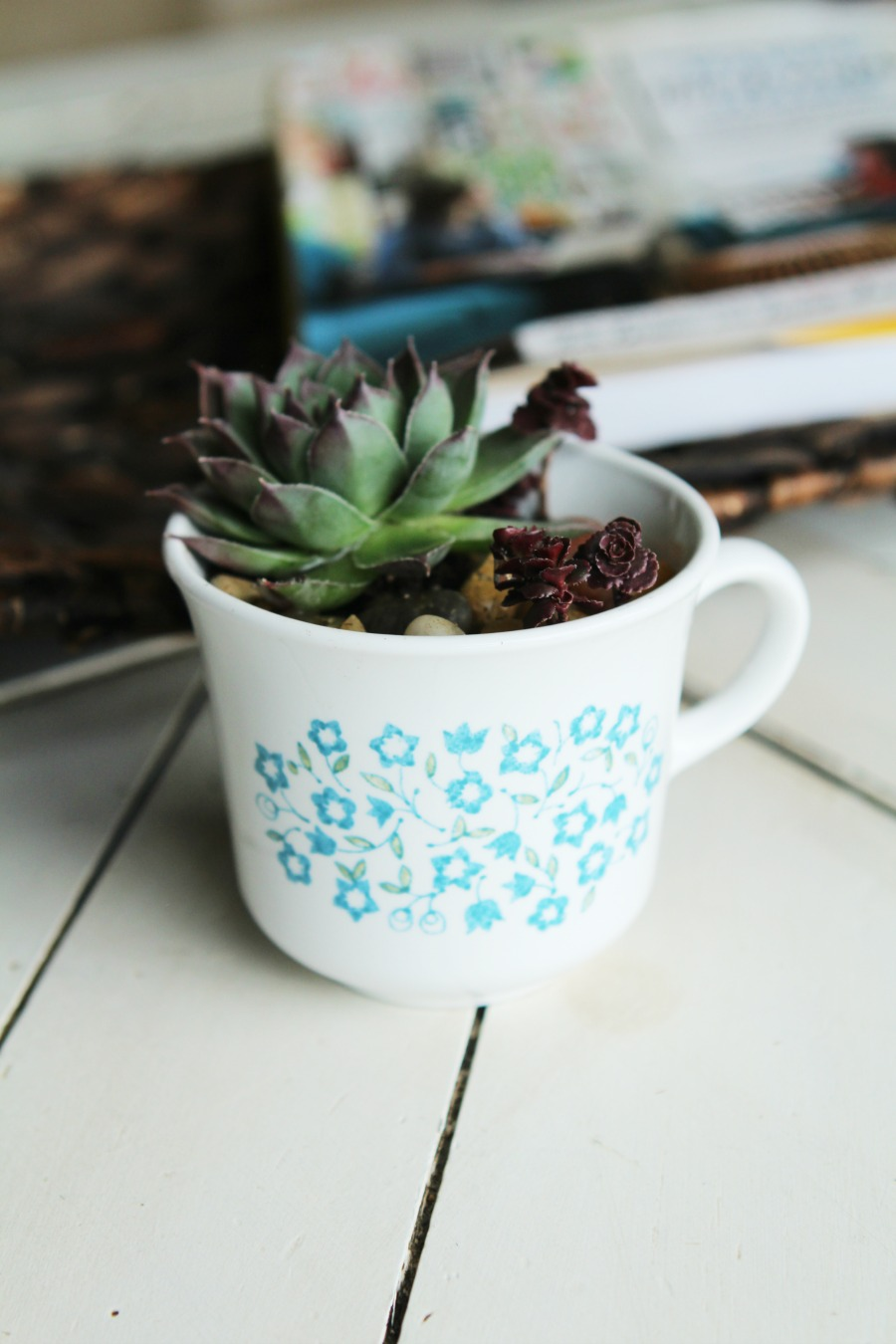Have a black thumb? Turn your black thumb to green with succulents! Seriously! These things are so easy to grow. Low maintenance plants that look pretty? Bonus! Check out this adorable DIY Succulent Teacup Planter. Makes an easy handmade gift idea! This would be so cute for Valentine's Day!