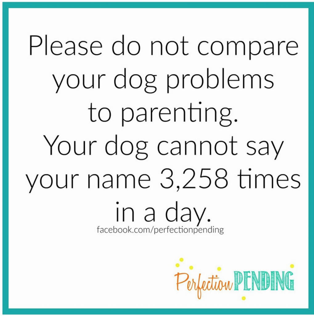 Please do not compare your dog problems to parenting. Your dog cannot say your name 3, 258 times in a day.