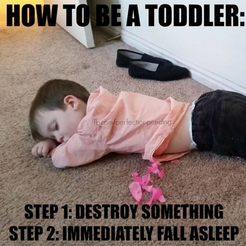 How to be a toddler: Step 1 - Destroy Something, Step 2 - Immediately Fall Asleep