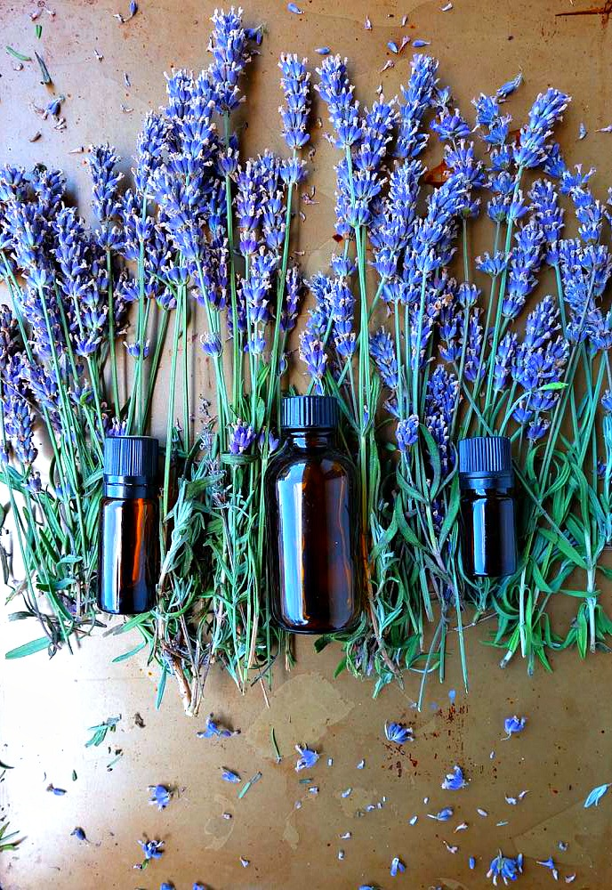 Who knew it was so easy? Learn to make DIY Lavender Essential Oil Tincture at home! The first post in Hello Creative Family's Think Ahead Handmade Gift Ideas Series! This lovely lavender extract can be used in a variety of lavender recipes and DIY projects! Simple to make and makes a lovely gift!!