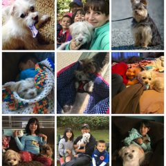 How We Adopted Our Rescue Dog– Mochi! October Recap
