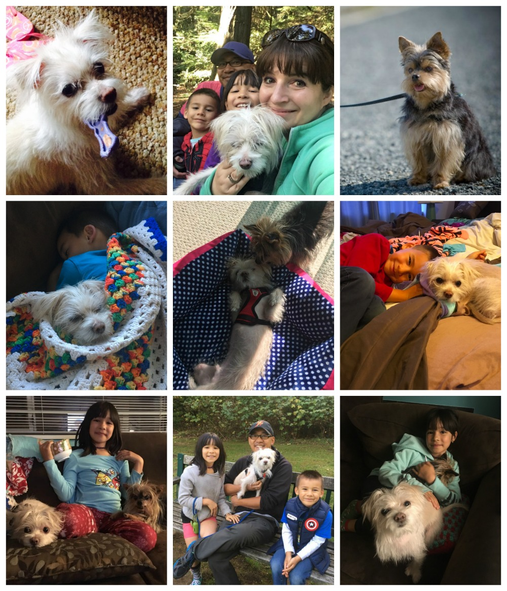 Hello Creative Family has a new family member-- Mochi! Crystal shares her rescue dog adoption story and how this loveable Maltese Terrier came to live with them in her October Recap.