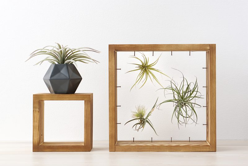We're combining two of our favorite things-- air plants and string art to create one amazing project! Check out our DIY Air Plant String Art Tutorial to learn how to make this awesome home decor piece that's easy and low maintenance to care for. These would make great handmade housewarming gifts, graduation gifts, teacher gifts, wedding shower gifts and more! #AirPlants #StringArt #DIY #Crafts