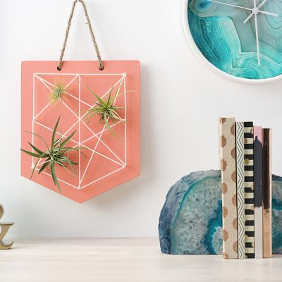 DIY Air Plant String Art- Tutorial With Step By Step Photos