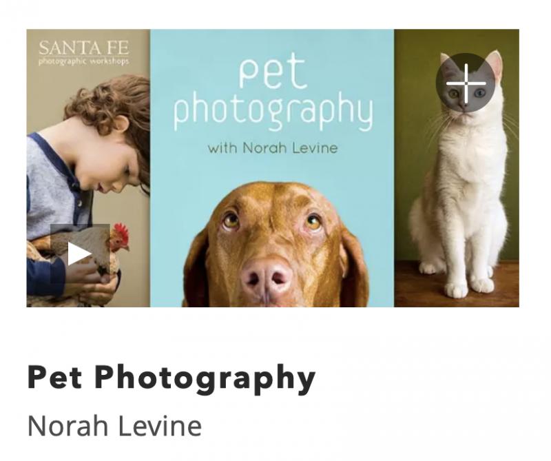 Kids Online Pet Photography Class